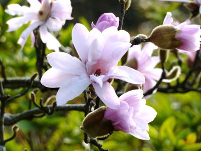 Flower_up
